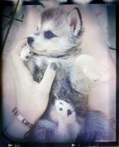 #Beautiful #Cute #animals