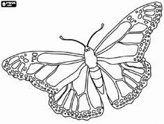 114 mejores imágenes de Mariposas Monarcas en 2020