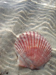 loooking for shells..ahh!