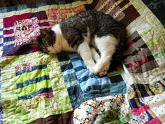 Tilkunviilaaja -- Kitty likes my Wild Things quilt. Kissa tykkää Villit kuviot -tilkkupeitostani