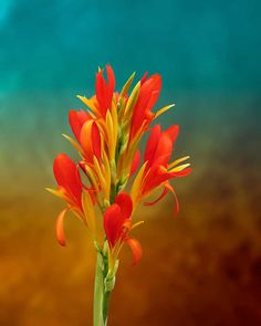 Orange Spray of Flowers Amazing Pictures Photo Print by Michael Taggart Photography flower vibrant red yellow gold green blue brown