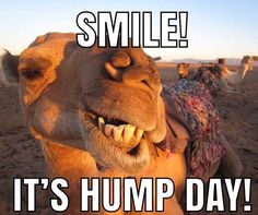 Smile Its Wednesday wednesday hump day humpday hump day camel wednesday quotes happy wednesday wednesday quote happy wednesday quotes Funny Hump Day Memes, Funny Wednesday Memes, Hump Day Quotes, Wednesday Hump Day, Hump Day Humor, Happy Wednesday Quotes, Good Morning Wednesday, Funny Mom Quotes, Frases