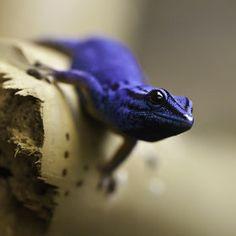 I like you Blue Boy