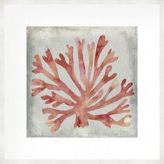 Trademark Fine Art 'Watercolor Coral Iii' Canvas Art by Megan Meagher, Size: 24 x Red Coral Watercolor, Watercolor Canvas, Painting Prints, Wall Art Prints, Canvas Prints, Paintings, Coral Art, Teal, Blue