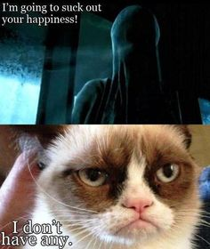 What's the dementor gonna do now?? Explode? Lol grumpy cat