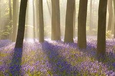 Antony Spencer- woods in Micheldever, Winchester