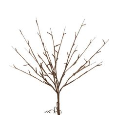 "RAZ Lighted Branch  Brown Made of Wire Measures 18.5"" Requires 3 AA Batteries (not included) Battery Operated with Timer 6 Hour Timer, Repeats Every 18 Hours Convertible Battery Box Optional AC Adapter #M3425598 UL Certified Indoor Use Only 60 Warm White Led Lights With Brown Stem Lights Approx 50,000 Hours  RAZ 2015 Natural Elegance Collection"