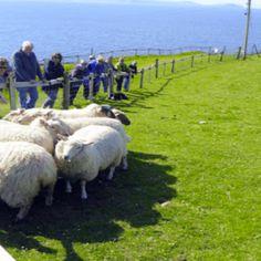 Dingle Pet Farm and Sheepdog Demonstrations Ventry Dingle Co. Ireland, Pets, Animals, Animais, Animales, Animaux, Animal