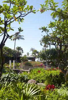 Hyatt Regency Maui Resort & Spa Rope Bridge