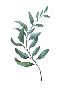 Image result for image search illustrated wattle vector