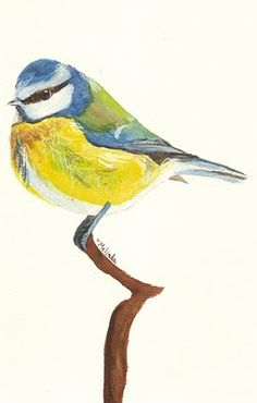 Drawings, Paintings, Thoughts: A Creative Spot: Christmas Birds