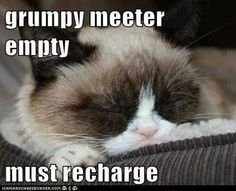 Grumpy Cat stuff gifts offers couponsand meme on www. Grumpy Cat Quotes, Funny Grumpy Cat Memes, Funny Cats, Funny Animals, Cute Animals, Grumpy Kitty, Baby Animals, Funny Memes, Meme Comics
