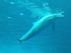 Delfini - Acquario di Genova - 26 febbraio 2014