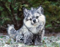 3dRose Sven Herkenrath Animal T-Shirts Portrait of Hedgehog Forest and Wildlife Animal Photography