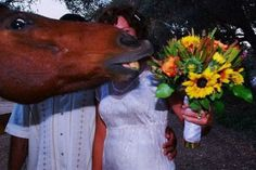 Someone needs to tell this horse that he has a face like a horse and he shouldn't go around ruining people's pictures.