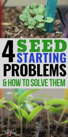 Common Seed Starting Problems- and How to Fix Them - Vegetable Gardening . -Most Common Seed Starting Problems- and How to Fix Them - Vegetable Gardening .