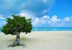 Aruba: o paraíso caribenho!