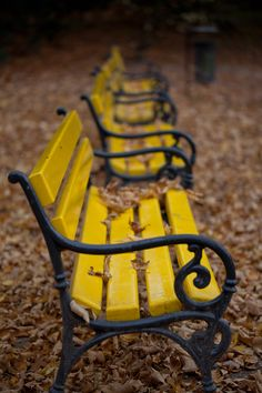 Yellow benches