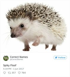 70 Funny Renamed Objects From Twitter