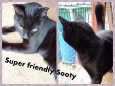 http://www.wearvalley.cats.org.uk/wearvalley/adopt-a-cat/?cid=49480
