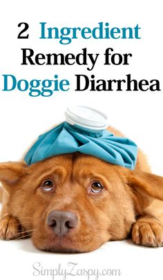 It's not if your dog will get diarrhea but when! Here's a 2 ingredient remedy for dog diarrhea to provide you and your furbaby with almost instant relief! Links directly to post ♥