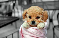 secando a un cachorro