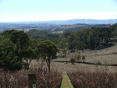 Habitiat Vineyard, Orange NSW