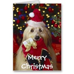 Merry Christmas 2015 special collection Christmas cute puppies photos ,Christmas…