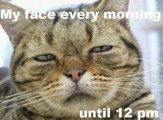 My every morning