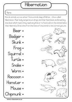hibernation worksheet more hibernation craft winter hibernation ...