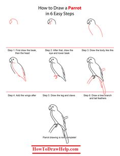 How to draw a parrot step by step tutorial -- lots of drawing tutorials at www.HowToDrawHelp.com