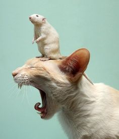 Get it off me!!!!!!