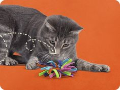DIY Homemade Cat Toys - Friskies®: Milk Jug rings and felt. Tie knots. Easy peasy.