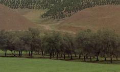 """""""Through the Olive Trees"""" - Abbas Kiarostami (1994)"""
