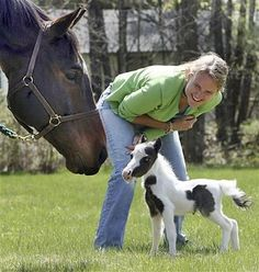 Mini Horses.  There is a wonderful miniature horse ranch.  It is a great place to take grandkids.  They are all behind a fence, but so beautiful and fun.