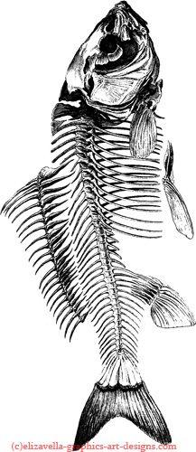 Skeleton Drawings, Fish Skeleton, Skeleton Art, Fish Drawings, Animal Drawings, Fish Anatomy, Collaborative Mural, Fish Sketch, Vintage Illustration Art