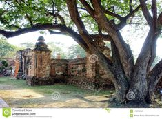 Photo about A stunning image of an ancient tree rooted at the corner of ancient Buddhist brick ruins in the small pilgrimage town near Bangkok Thailand. Image of town, near, buddha - 113936584 Ayutthaya Thailand, Bangkok Thailand, Entry Gates, Tree Roots, Pilgrimage, Brick, Stock Photos, Plants, Entrance Gates