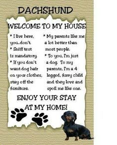 Dachshund Welcome to My House Magnet.this is my two little dachshund Bailey and Riley Dapple Dachshund, Mini Dachshund, Dachshund Puppies, Weenie Dogs, Daschund, Doggies, Funny Dachshund, Mini Schnauzer, Welcome To My House