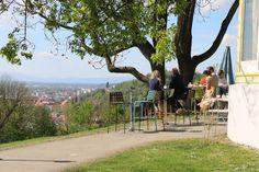 Entland der Promenadengasse zum Café Rosenhain. Nach einem kurzen Anstieg hat… Dolores Park, Travel, Tips, Viajes, Trips, Tourism, Traveling
