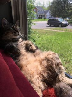 15 Cats Gazing Out The Window And Looking Cute - World's largest collection of cat memes and other animals I Love Cats, Crazy Cats, Cute Cats, Funny Cats, Pretty Cats, Beautiful Cats, Kittens Cutest, Cats And Kittens, Animals And Pets