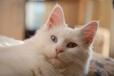 Lulu | Flickr – Compartilhamento de fotos!
