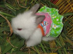 now i know what those little outfits you find in every pet section of a store are for..bunny dress up!