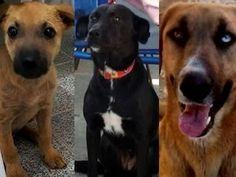 BONDE DA BARDOT: RJ: Feira de adoção integra campanha Outubro Rosa Animal em Petrópolis, neste sábado (24/10)