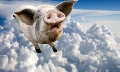 Flying pig video - hilarious! From Wonderopolis 'When will pigs fly?'