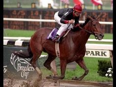 Inside Information(1991)(Filly) Private Account- Pure Profit By Key To The Mint. 5x4 To Nasrullah, 5x5 To War Admiral. 17 Starts 14 Wins 1 Second 2 Thirds. $1,641,806. Won 1995 BC Distaff(G1) On A Muddy Track As The 4-5 Favorite. Jockey Mike Smith- Trainer Shug McGaughey- Owner Ogden Mills Phipps.