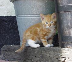 Ginger by SarahharaS1.deviantart.com on @deviantART