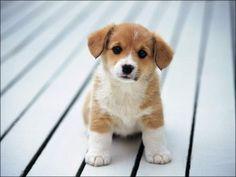 Perritos tiernos / Cute puppies :D