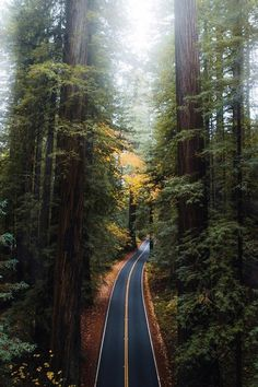 USA Road Trip Ideas and Tips. If you are looking to head out on a road trip, there are a lot of different places you could go. Below, we will be going over some of the top USA road trip Beautiful Roads, Beautiful Streets, Beautiful Places, The Road, Road Trip Usa, State Parks, Humboldt Redwoods State Park, Landscape Photography, Nature Photography
