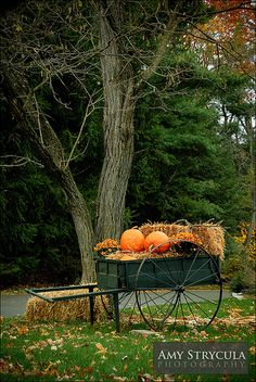 All sizes | Halloween Decorations | Flickr - Photo Sharing!
