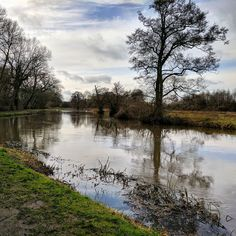 The water levels of the #riverwey are very high. Very muddy walk along the #towpath #Guildfod